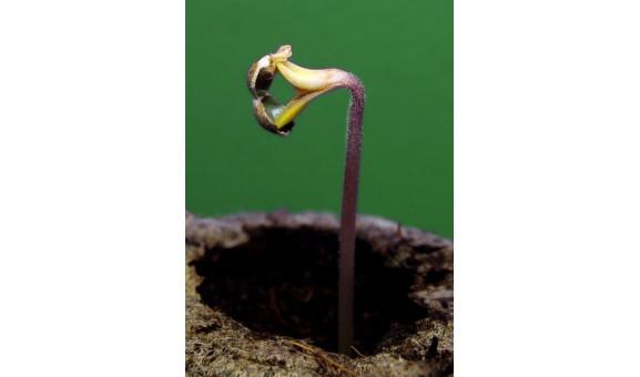 Germinacion de semillas